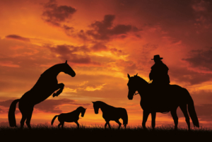 Stuttgartnacht - Silhouette cowboy with horses in the sunset